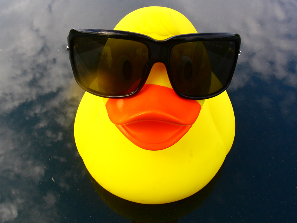 Duck With Sunglasses
